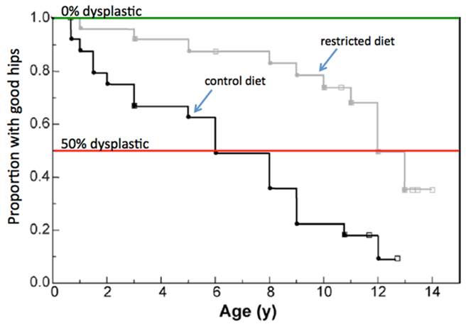 age weight factor for hip dysplasia graph