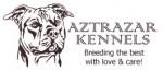 AZTRAZAR (American Staffordshire Terrier)