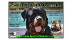 CAMELWEST (Rottweiler)