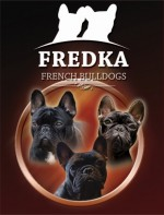 FREDKA (French Bulldog)