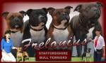 FRELONIUS (Staffordshire Bull Terrier)