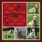 JAZET (Scottish Terrier)