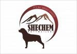 SHECHEM (Rottweiler)
