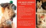 VON NALEO (Scottish Terrier)