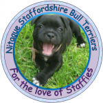 NITQUE (Staffordshire Bull Terrier)